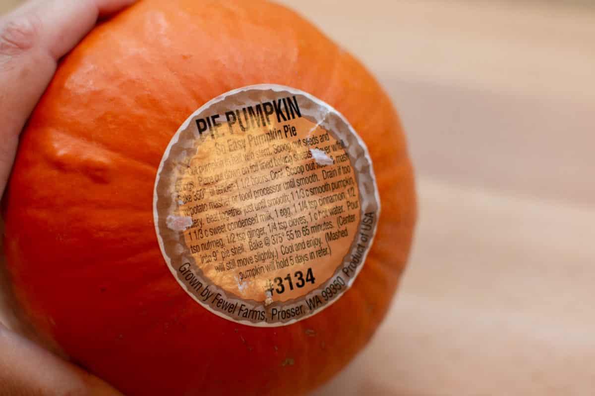 close up of bottom of pumpkin. A Sticker with a pie recipe.